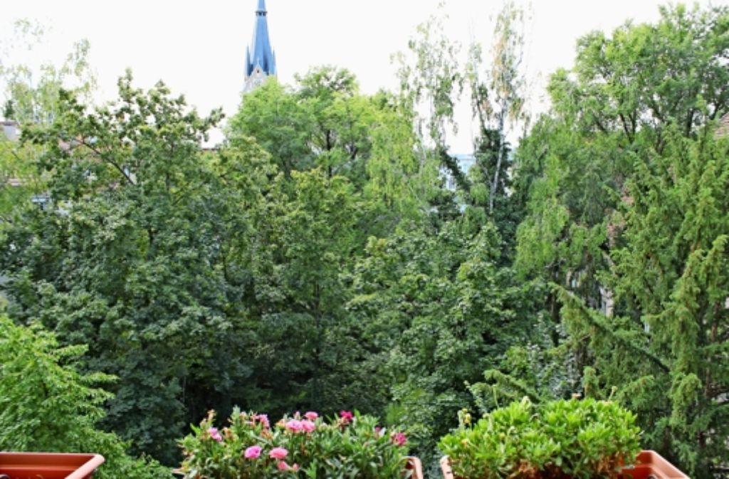 Die Gelbkopfamazonen sitzen meist morgens  auf den Bäumen in diesem Innenhof im Kurpark-Viertel. Foto: Maira Schmidt