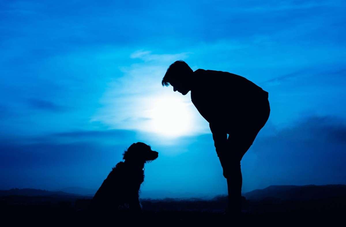 Hundehalter dürfen mit ihren Vierbeinern auch nach 20 Uhr auf die Straße. Foto: imago images/Cavan Images