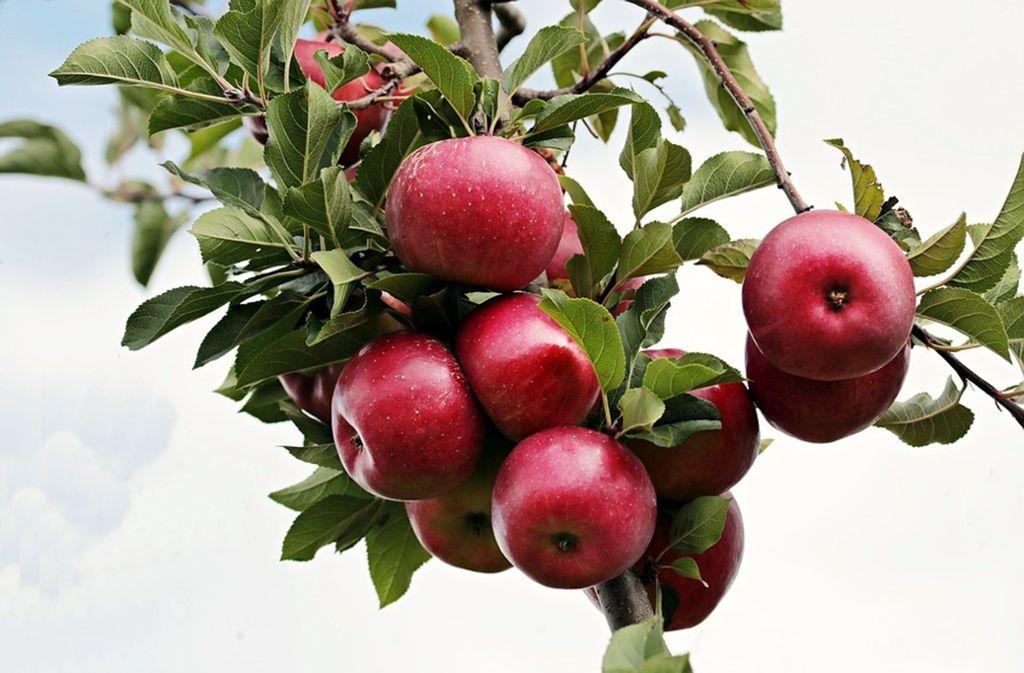 """Fleißige ehrenamtliche """"Obstbauern"""" bekommen Unterstützung von der Gemeinde. Foto: www.pixabay.com"""