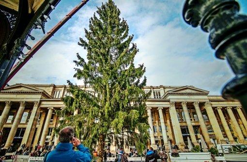 Zwei Weihnachtsbäume stehen schon