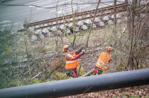 Bäume beim Rosensteintunnel werden gefällt