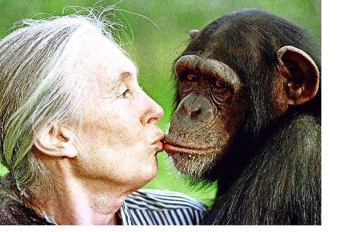 Jane Goodall sucht ihre Nachfolger
