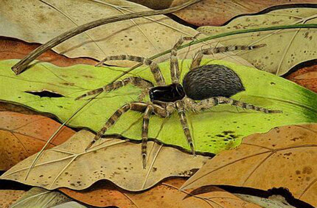 Laut einer Rekonstruktionszeichnung hätte die Spinne so vor 48 Millionen Jahren aussehen können. Foto: HLMD/Elke Gröning