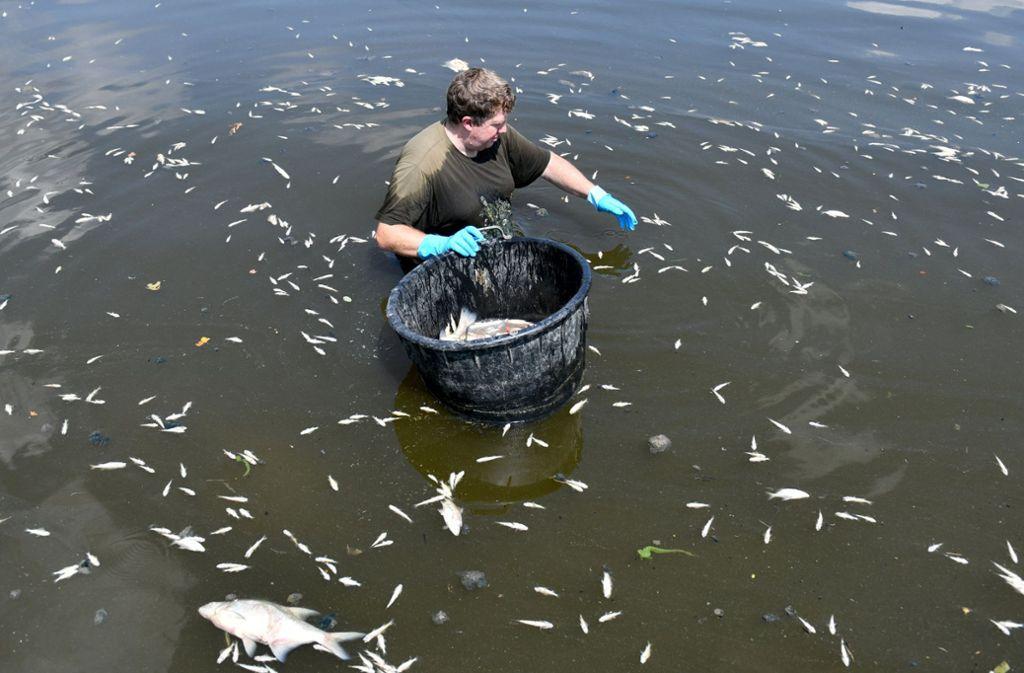 Fast 20 Tonnen Fische sind im Stausee Rötlen bei Ellwangen durch die Hitze gestorben. Foto: dpa