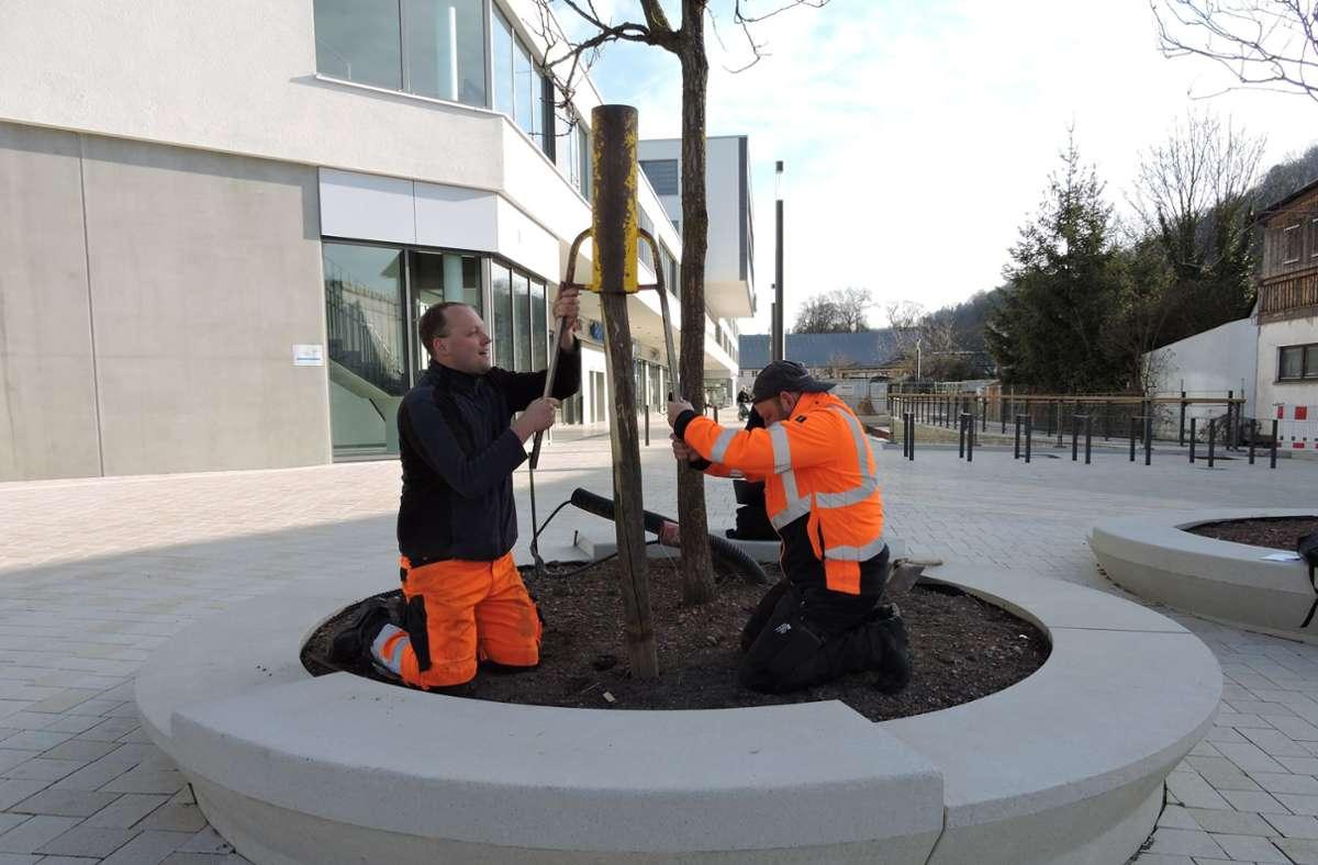 Tobias Kiel (Abteilung Gartenbau, TUG) und Baumkontrolleur Christoph Stotz (v.l.) beim Einbau der Sensoren Foto: Stadtverwaltung Herrenberg