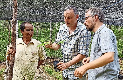 Eine Baumschule für den Dschungel