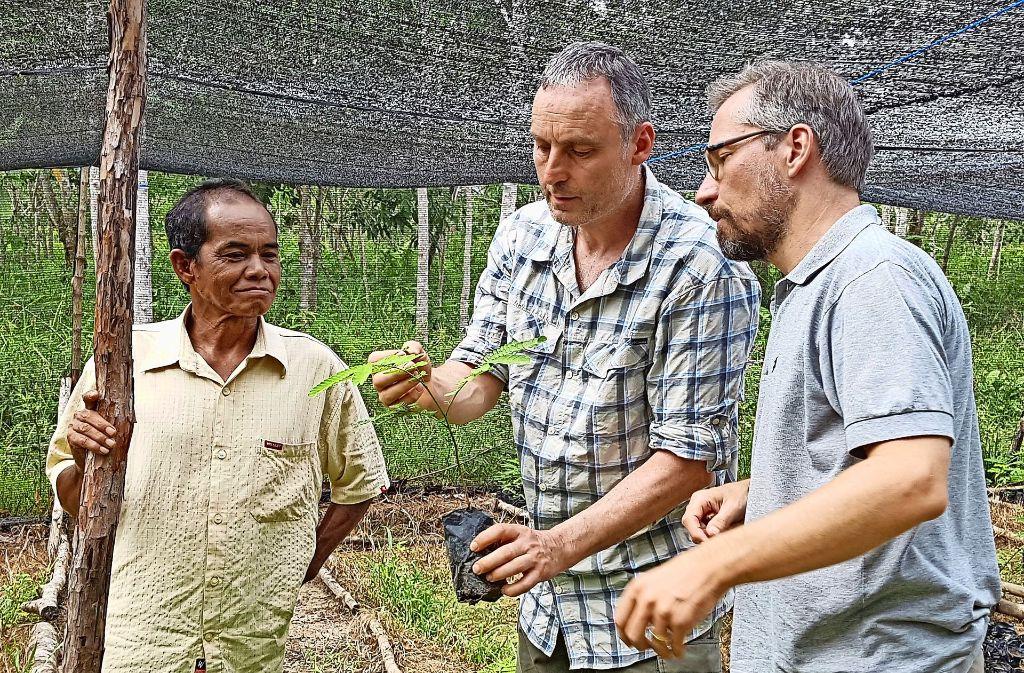 Harald Müller (Bildmitte) und ein Projektleiter von Fairventure begutachten  in der Baumschule einen Sengon-Setzling. Foto: privat