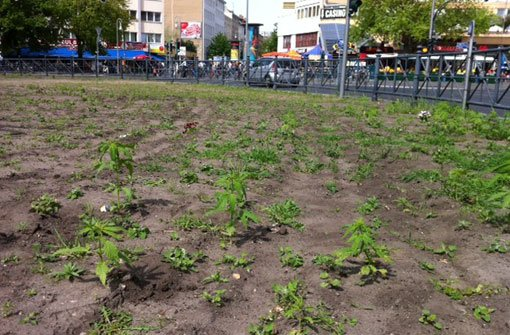 Verdächtige Pflanzen mitten in Berlin
