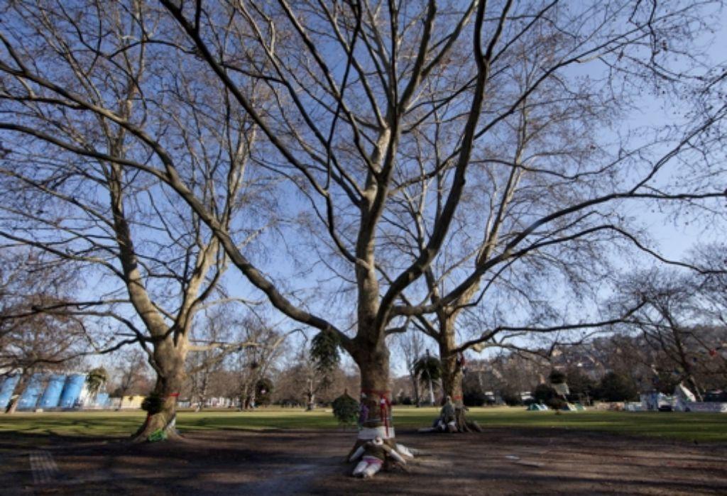 Die Bäume im Schlossgarten dürfen gefällt werden. Foto: dapd