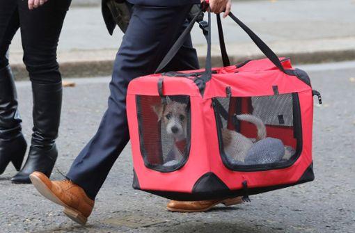 Terrierwelpe zieht in die Downing Street