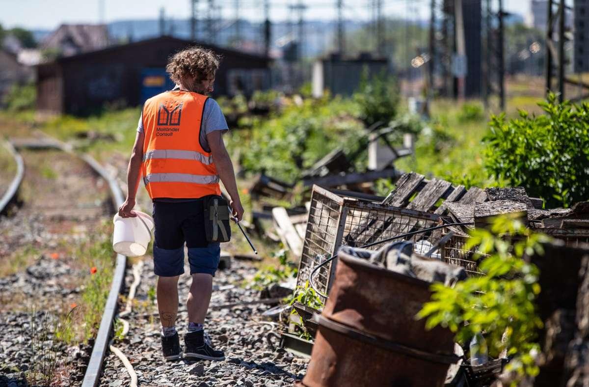 Auf alten Bahnanlagen fühlen sich Mauereidechsen wohl. Im Bereich des geplanten Neuhauser Bahnhofs wurde eine Population gefunden. Foto: dpa/Christoph Schmidt