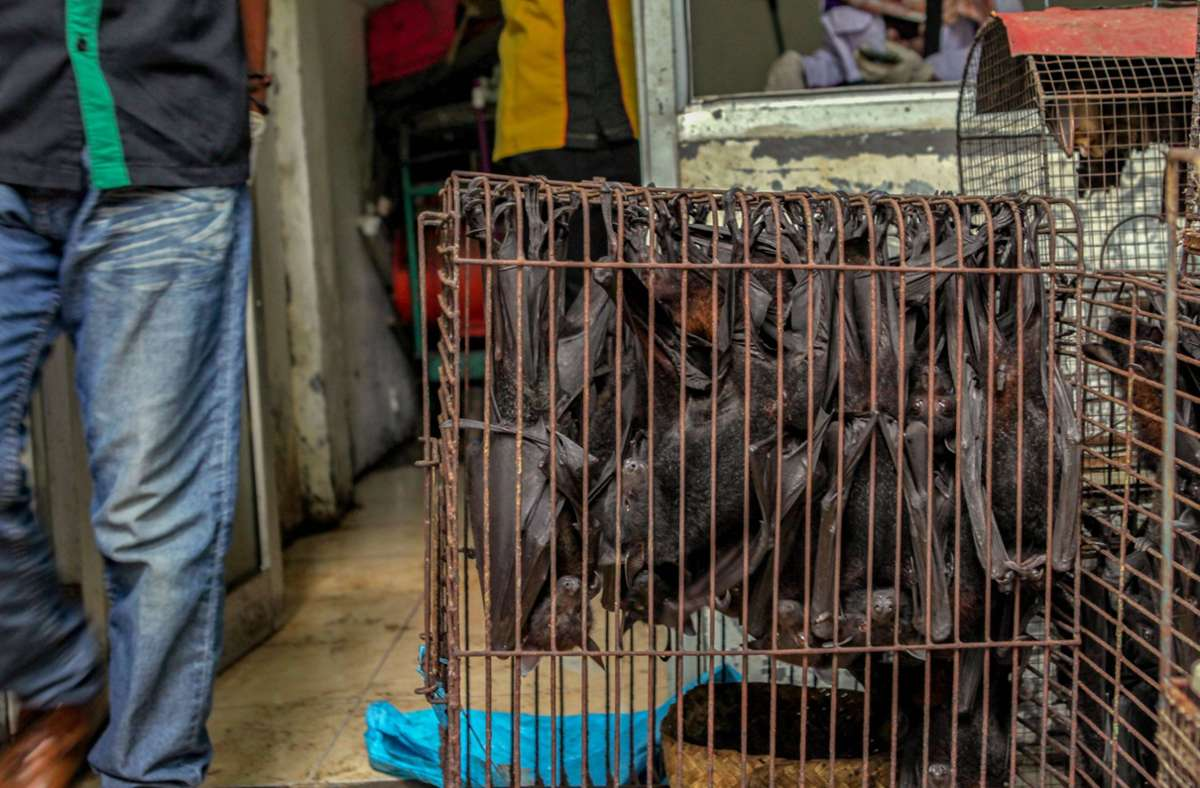 Lebende Wildtiere sollen laut WHO auf Lebensmittelmärkten nicht mehr verkauft werden dürfen. (Symbolbild) Foto: imago images/Opn Images/Izzat Fahmi / Opn Images via www.imago-images.de
