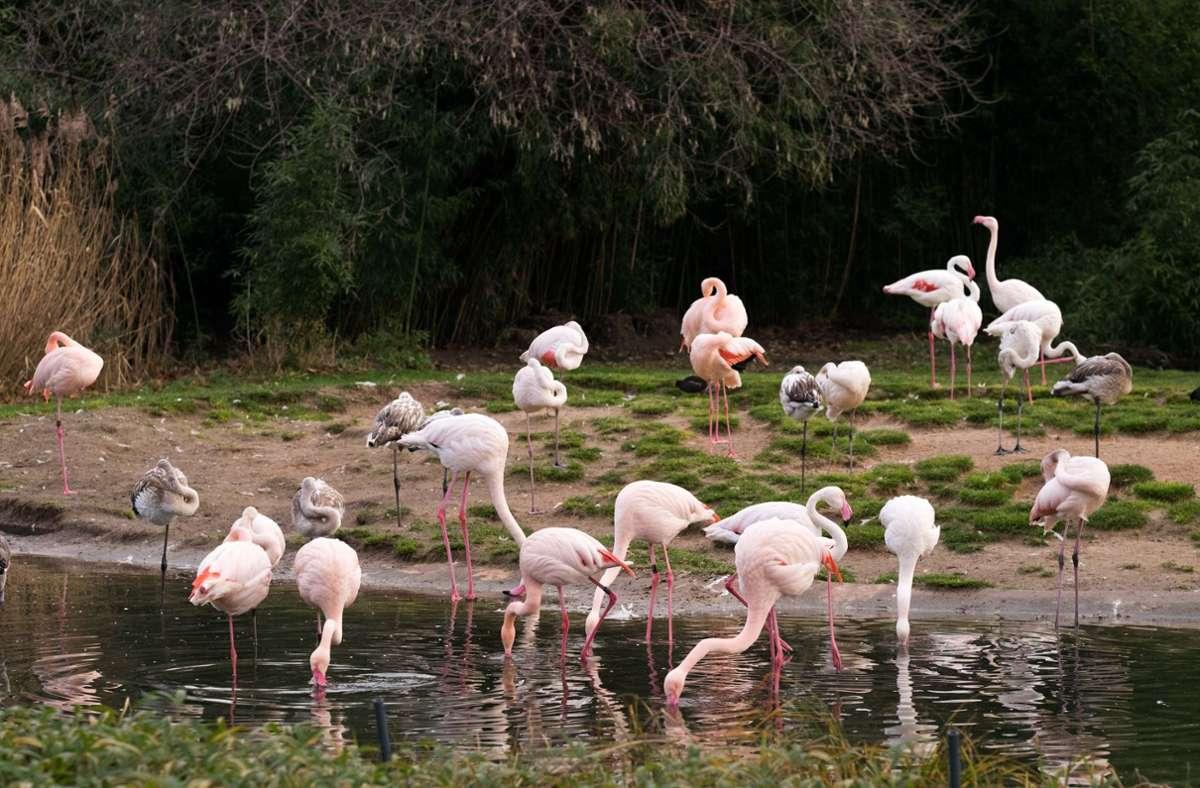 Die Polizei sucht die Flamingo-Diebe (Symbolbild). Foto: Lichtgut/Max Kovalenko