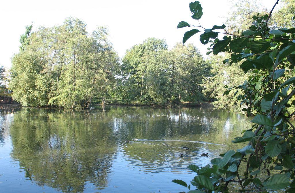 Der Riedsee ist eine Idylle. Doch der Schein trügt. Die Angler beklagen seit Jahren, dass zu viel Geäst am Boden und zu viel Müll am Ufer liegt. Foto: Archiv Alexandra Kratz