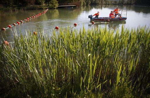 Schwimmer weichen in Natur aus