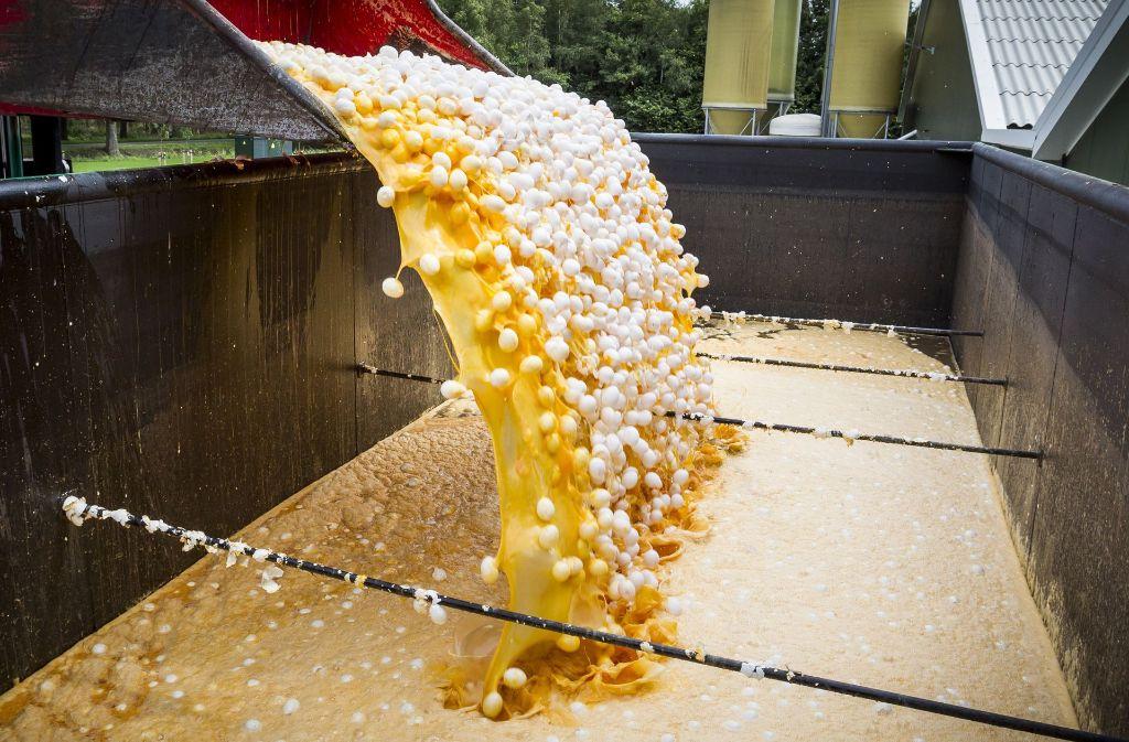 In den Niederlanden werden zahlreiche Eier nun zerstört. Foto: dpa