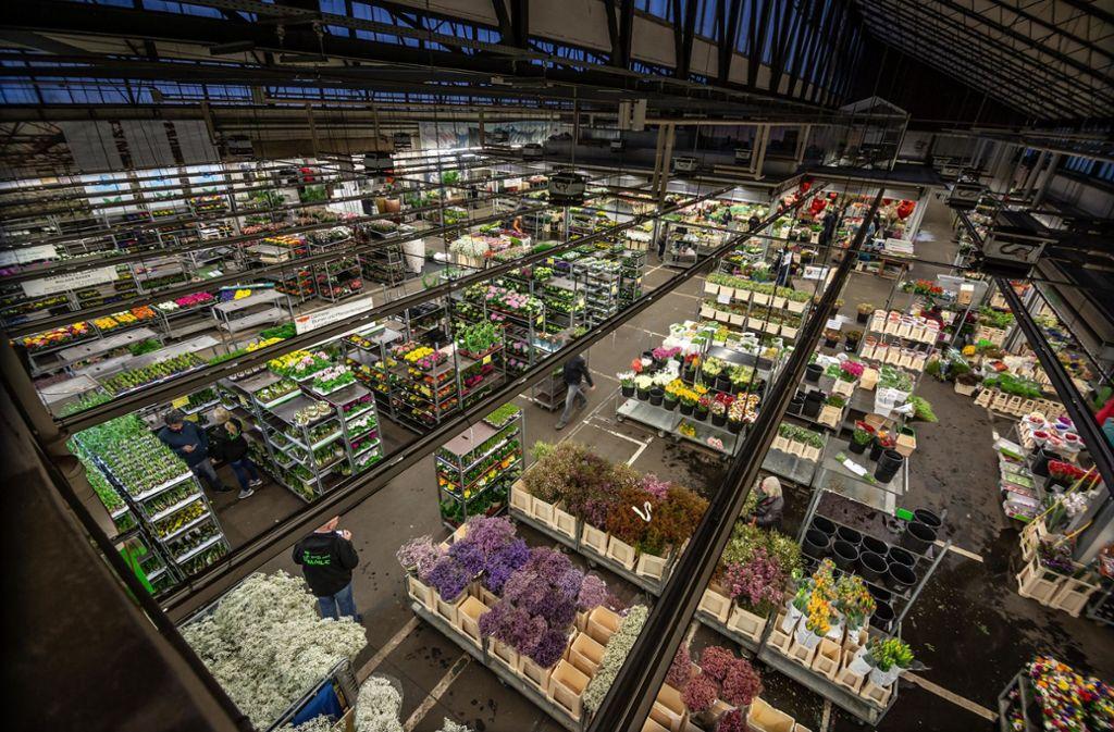 Eine Halle des Blumengroßmarkts Foto: Lichtgut/Julian Rettig