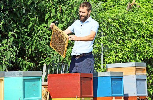 Warum Bienen für den Menschen wichtig sind