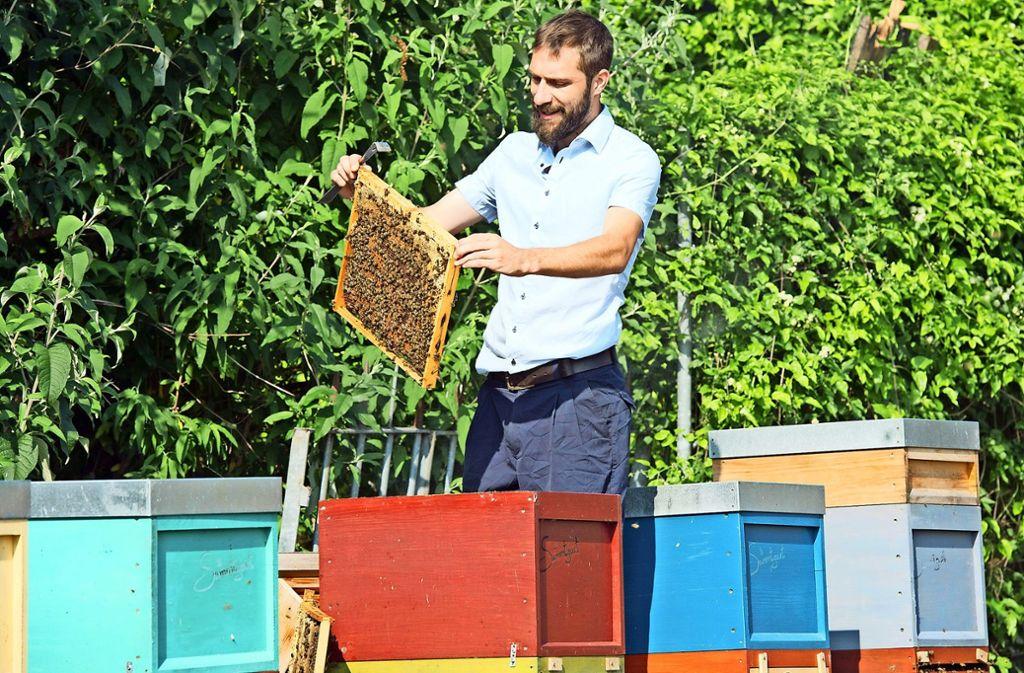 David Gerstmeier vom Verein pro Biene in Stuttgart. Foto: Lichtgut/Oliver Willikonsky, dpa