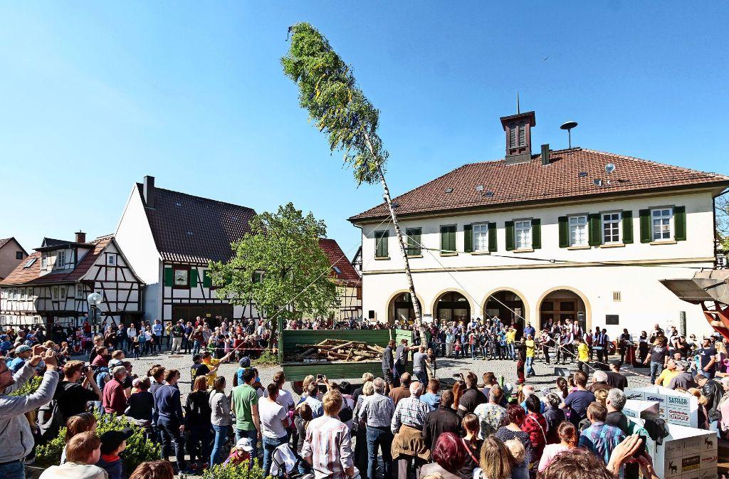 """Und ziehen! Die """"Jungen Wilden"""" hieven mit vereinten Kräften auf dem Eltinger Kirchplatz den Maibaum in die Höhe. Foto: factum/Bach"""