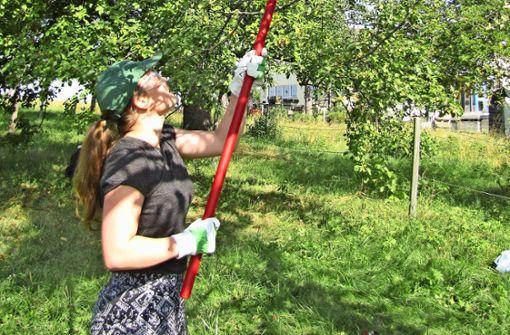 Deshalb schwitzen diese Jugendlichen auf Obstbaumwiesen