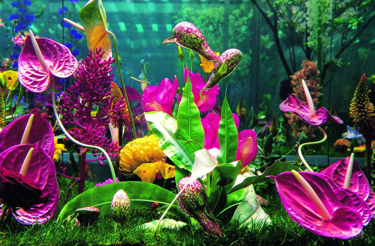 """Marc Quinn, """"Garden"""", aus dem Jahr 2000. Haltbar gemachte Pflanzen – zu sehen in dem Bildband """"Flower"""" im Phaidon-Verlag. Foto: Attilio Maranzano. Courtesy Marc Quinn studio and Fondazione Prada /Phaidon-Verlag"""