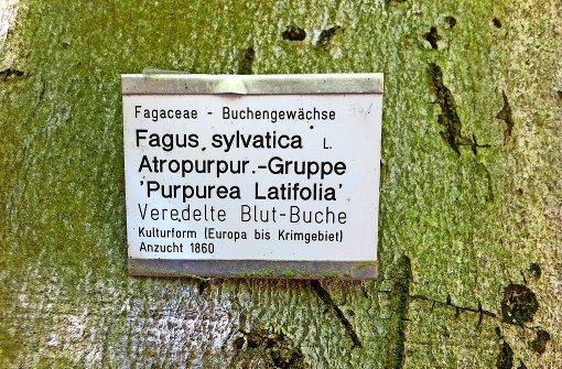 Wo die Bäume Visitenkarten tragen