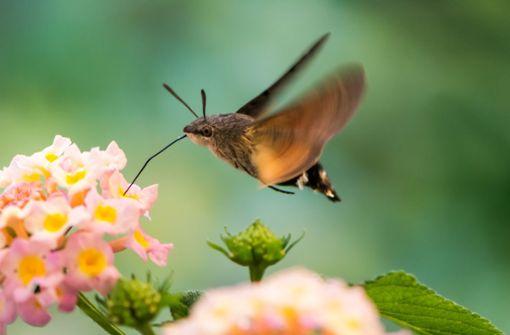 Wie gut kennen Sie einheimische Arten?