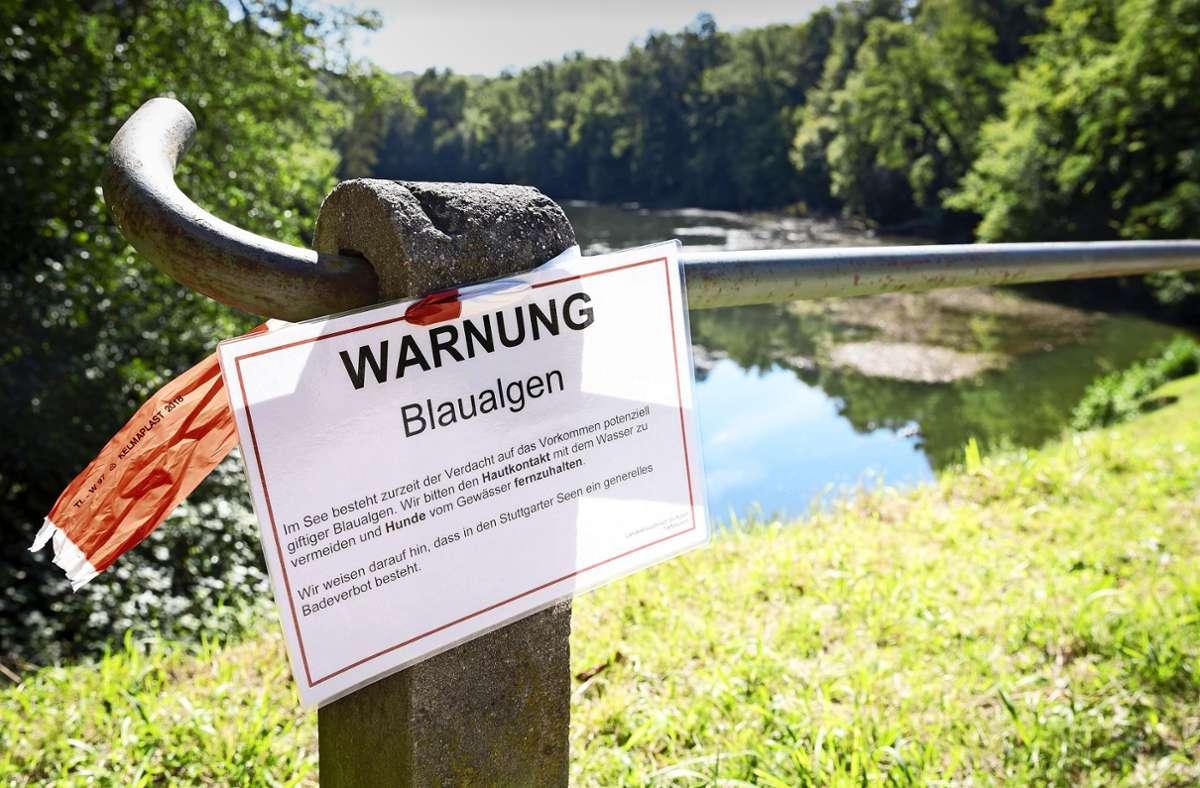 Ein Schild warnt vor dem Blaualgenbefall der Parkseen. Foto: Lichtgut/ Julian Rettig