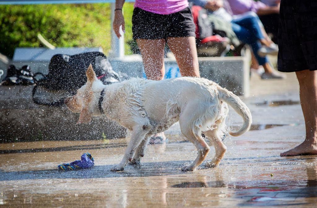 Beim Hundebaden im Freibad muss man nicht in den Pool, um nass zu werden. Foto: Michael Steinert