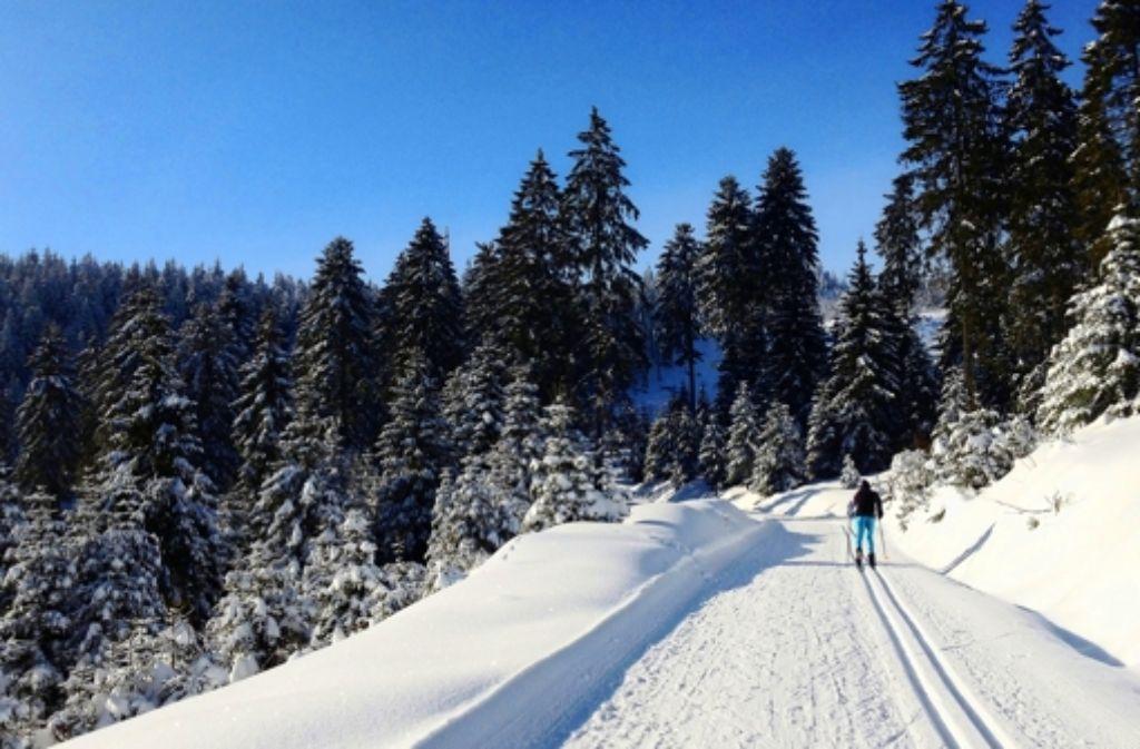 Wirklich unberührten Wald gibt es nicht mehr: ein Langläufer an der Hornisgrinde im Nordschwarzwald. Foto: dpa
