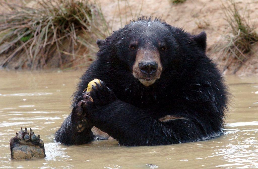 So einen Bären hat eine Familie aus der Chinesischen Provinz Yunnan tatsächlich für einen Hund gehalten (Symbolbild). Foto: dpa