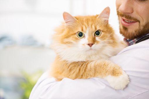 Katze richtig hochheben und tragen