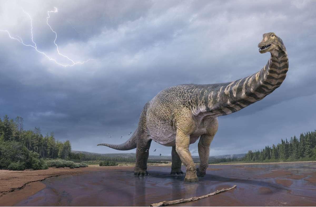 Eine künstlerische Darstellung zeigt den Dinosaurier Australotitan cooperensis oder den Südtitan. Paläontologen haben bestätigt, dass Queensland einst die Heimat eines der größten Dinosaurier der Welt war. Foto: Vlad Konstantinov/Scott Hocknul/Queensland Museum/The Eromanga Natural History Museum/AAP/dpa