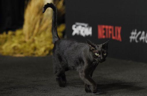 Die Katze auf dem Premieren-Catwalk