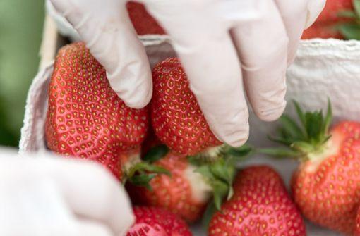 Importierte Erdbeeren von Pestiziden belastet
