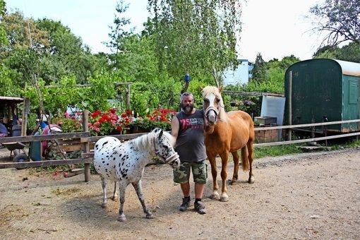 Neues Zuhause für die Ponys gesucht