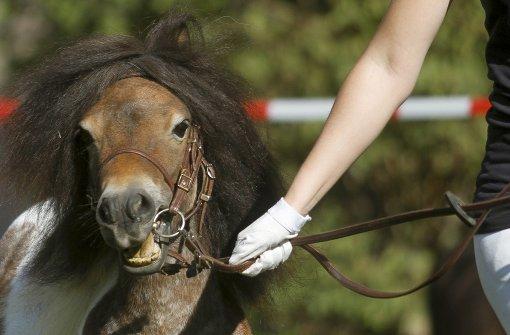 Der Pferdemarkt soll sicherer werden