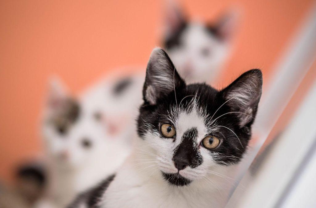 Die Polizei sucht vier Katzenbabies – sie könnten gestohlen worden sein (Symbolbild). Foto: Archiv (Weingand)