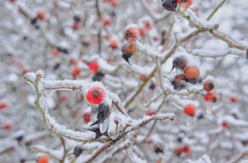 Eisiger Ostwind bringt bis zu minus 20 Grad