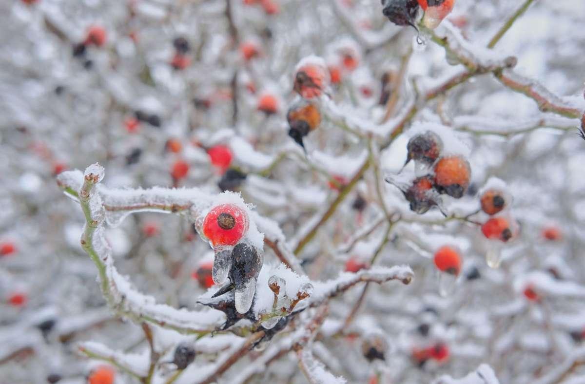Eisige Temperaturen werden in der kommenden Woche erwartet. Foto: dpa/Stefan Jaitner