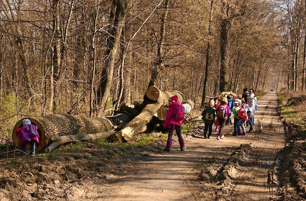 Der Haldenwald soll nur wenig von den Bauarbeiten beeinträchtigt werden. Foto: A. Kratz