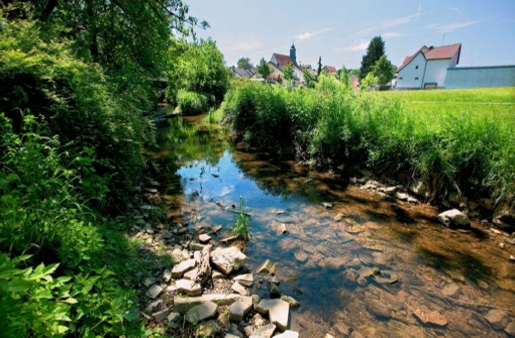 Über die idyllische Bachaue soll die Brücke führen. Foto: Horst Rudel