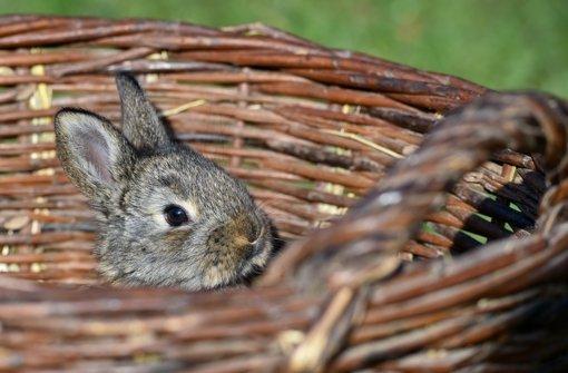 An Ostern wirds wieder freundlicher