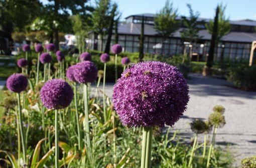 Die Highlights der Remstal-Gartenschau