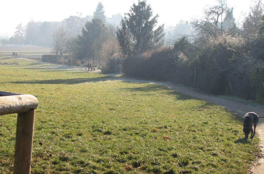 Das Ramsbachtal in Stuttgart-Degerloch ist beliebt bei Hundebesitzern. Das gefällt nicht jedem. Foto: Archiv Sägesser