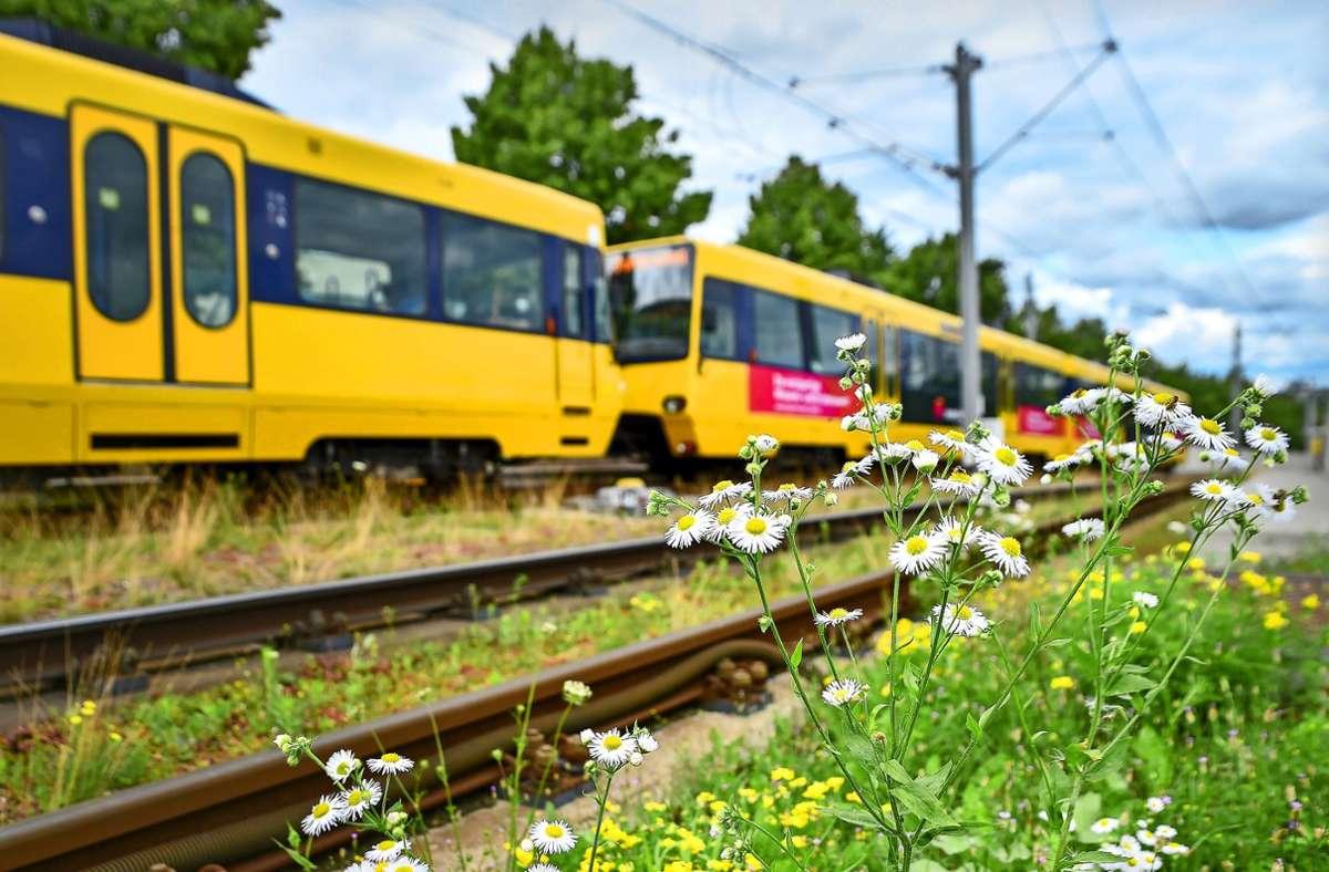 An der Stadtbahnhaltestelle Hallschlag  bietet ein Magerwiesengleis Heimat für viele Insekten. Foto: Lichtgut/Ferdinando Iannone