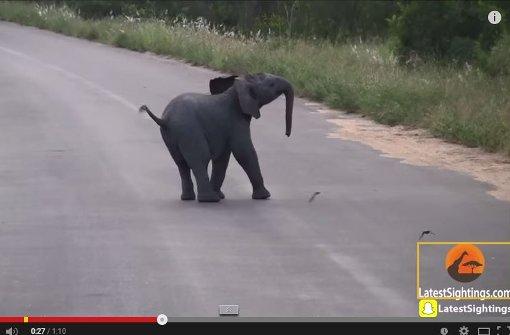 Kleiner Elefant jagt Vögeln hinterher
