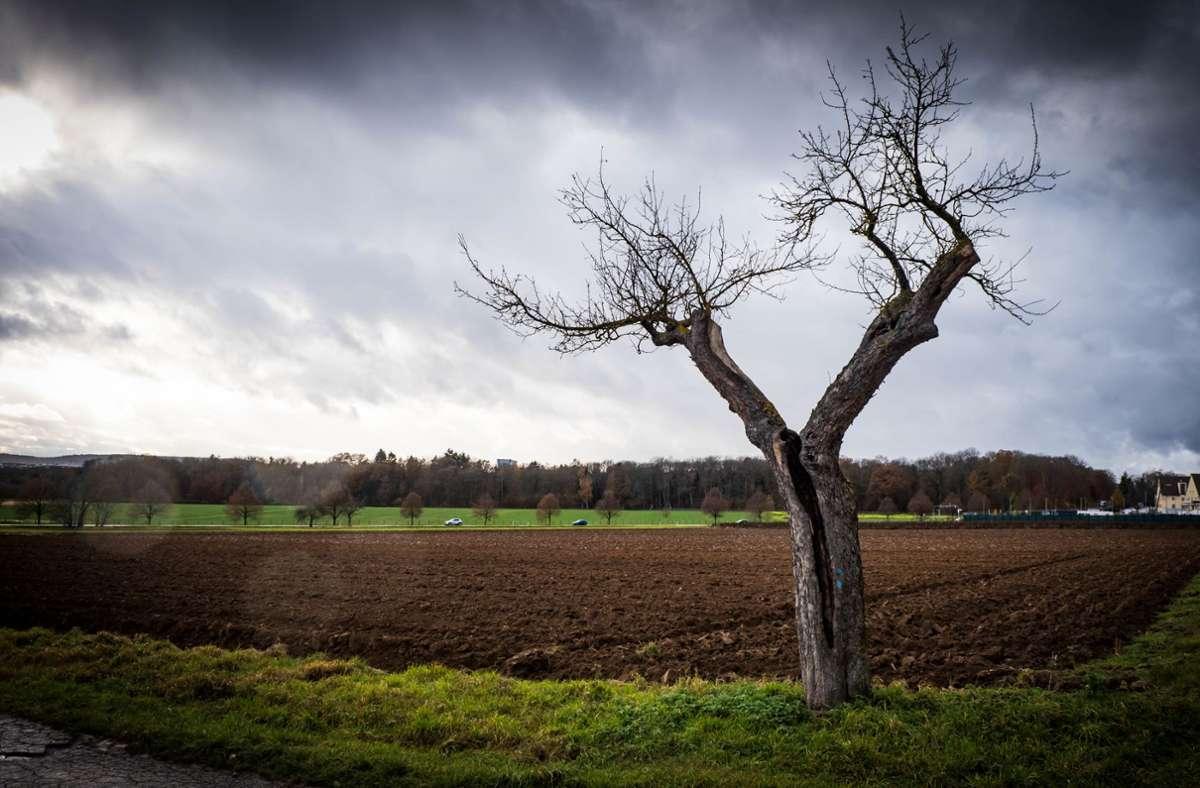 Das Birkacher Feld sei eine wichtige Freifläche auf der Filderebene, sagen die Mitglieder des neuen Aktionsbündnisses. Foto: Lichtgut/Achim Zweygarth