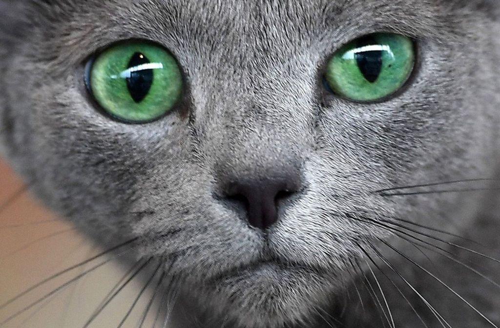 Ein Katzenblick kann Bände sprechen. Foto: dpa/Martin Schutt